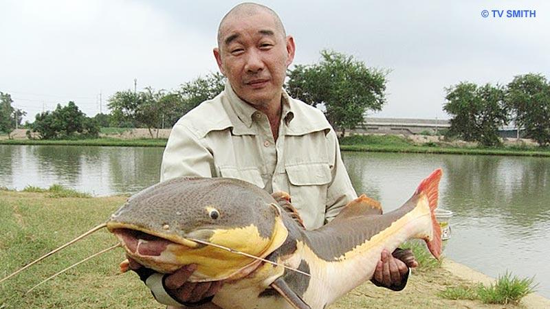 Like Angler Like Fish