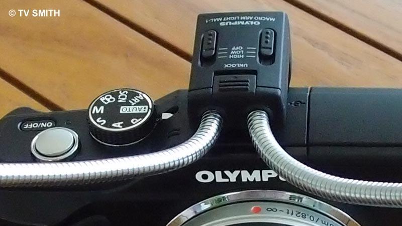 Olympus XZ-1, ISO 500, f 2.5, 1/160 sec - 100% crop from original