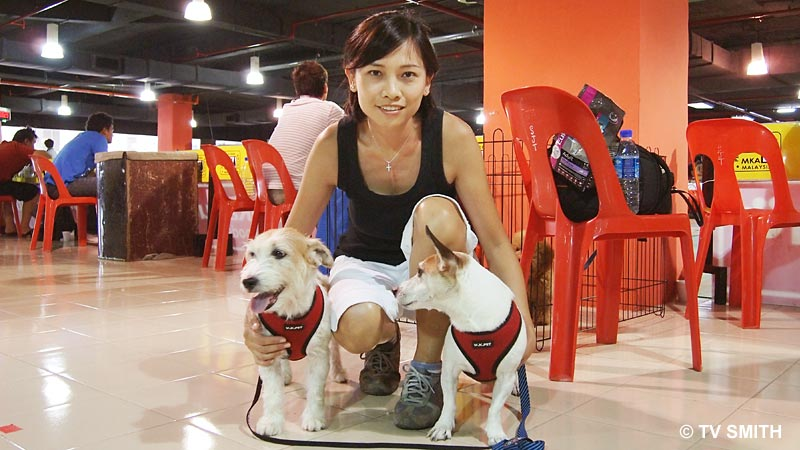 Bailey & Biscuit, Jack Russell Terriers with Gina