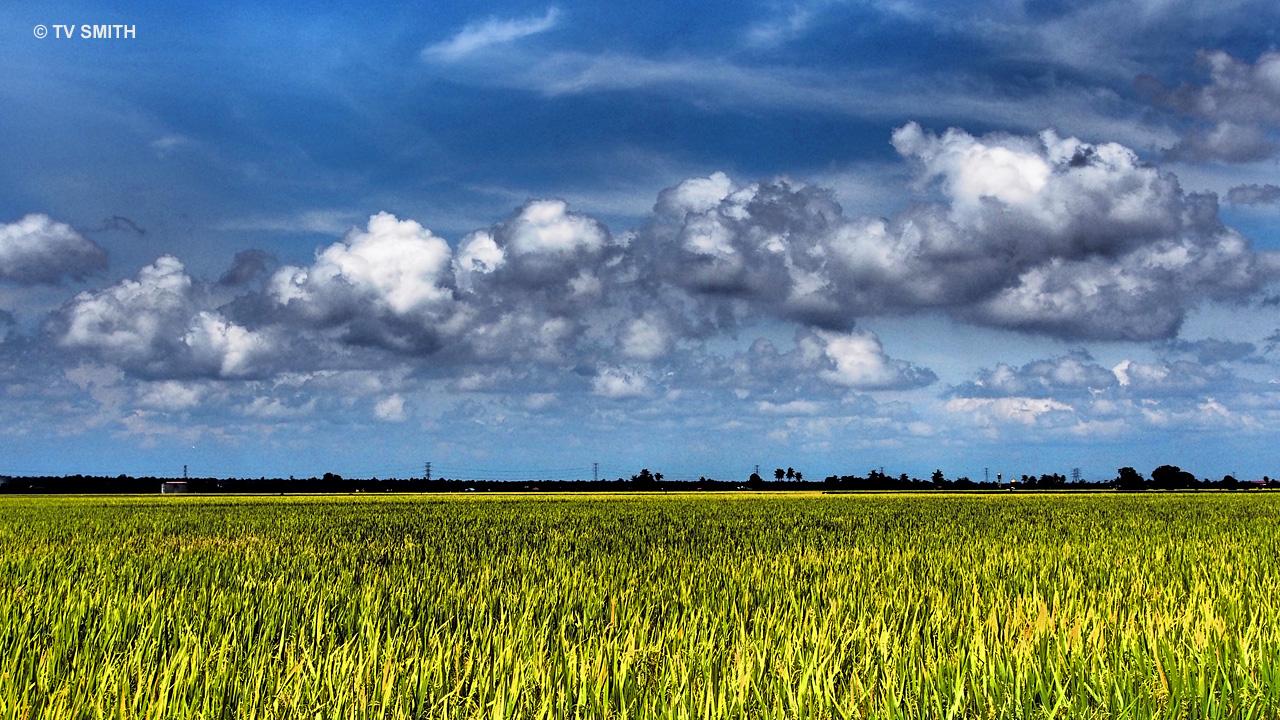 Gorgeous Sky & Glorious Rice