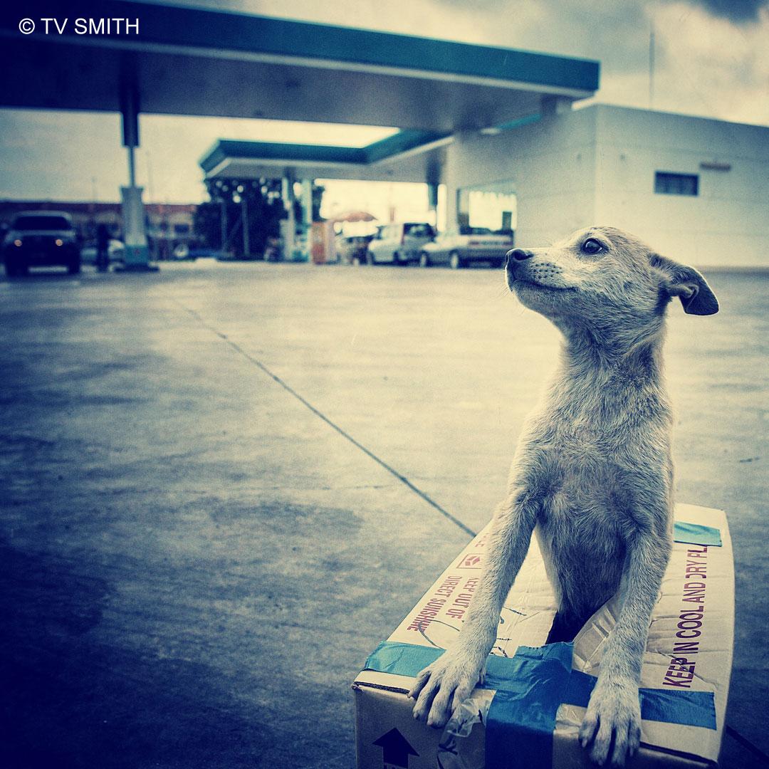 A Homeless Puppy