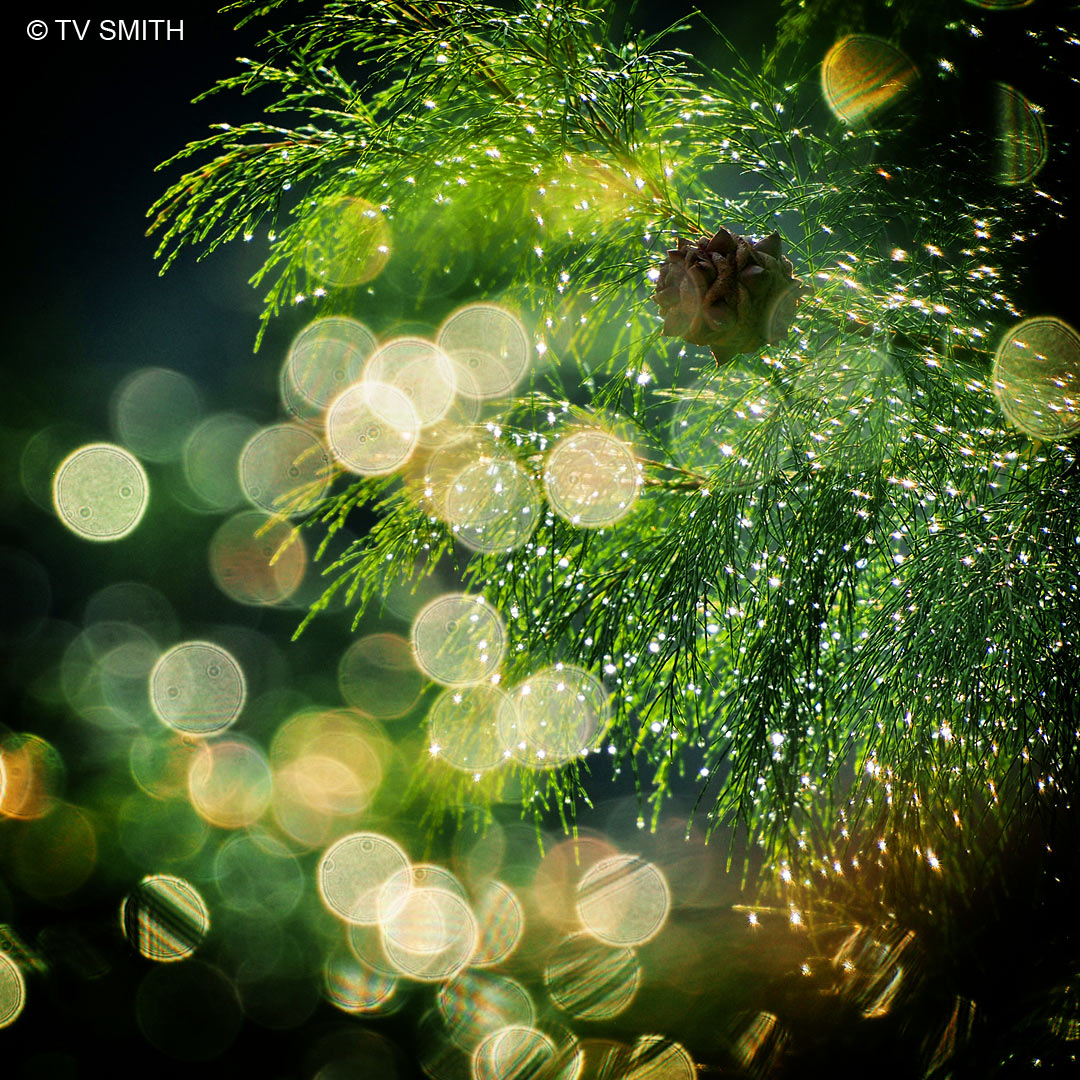 Mother Nature's Christmas Tree