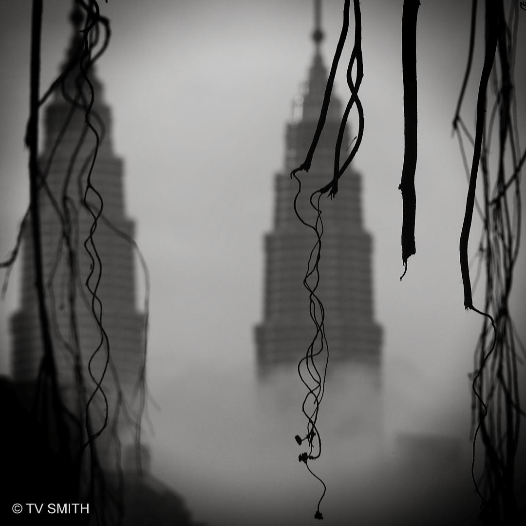 Misty Morning, Overhanging Vines