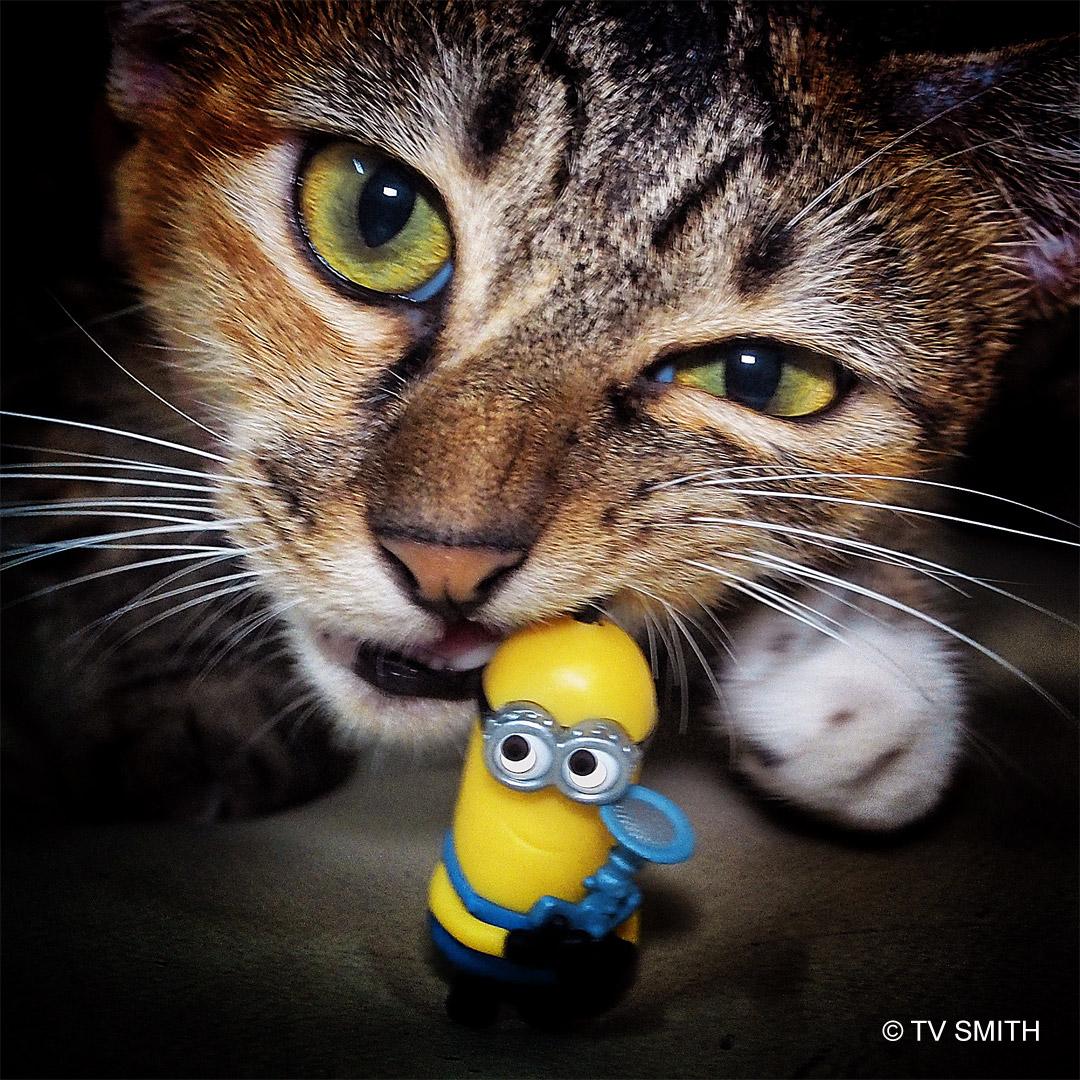 Despicable Meow